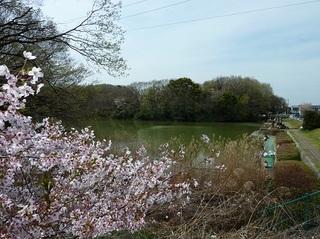 20120415明徳公園B.jpg